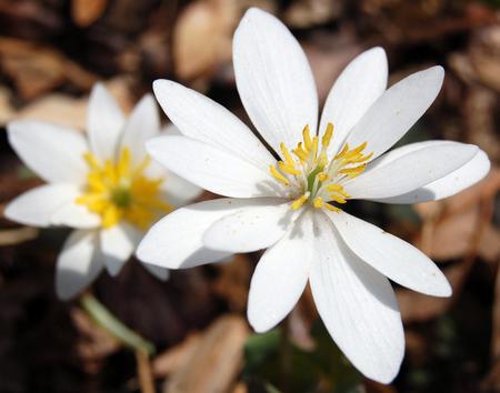 Little_flowers