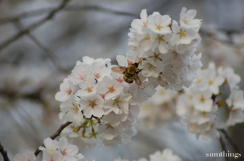 Walking_busy_bees2
