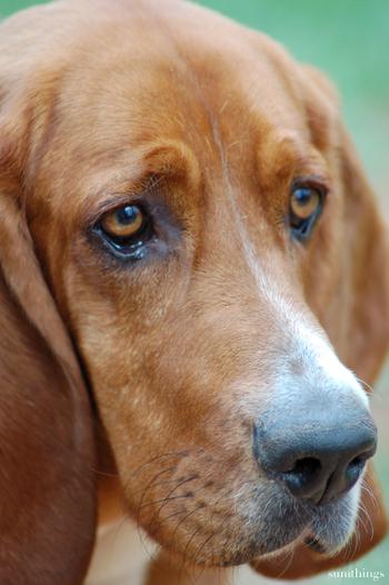 Puppydog_face