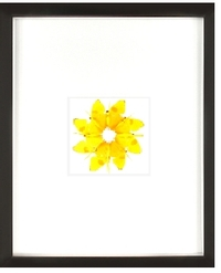 Yellow_ring_framed_1
